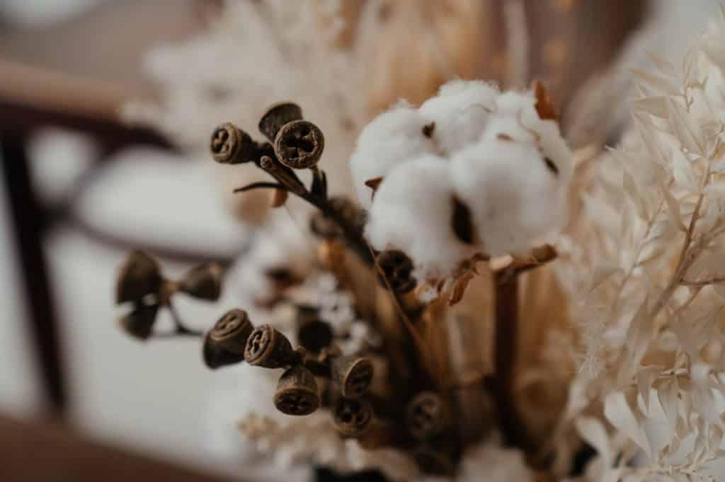 símbolo de la flor de algodón primer año de matrimonio